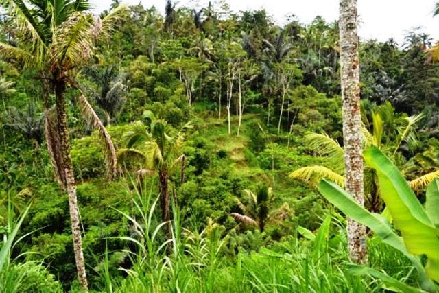 Tanah dijual di Ubud view bagus untuk villa - TJUB060B