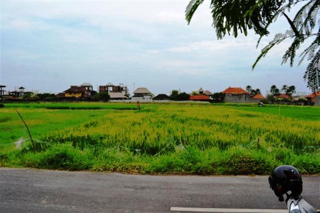 Tanah dijual di Canggu Bali 11 are dekat Echo Beach dengan view sawah - TJCG033B