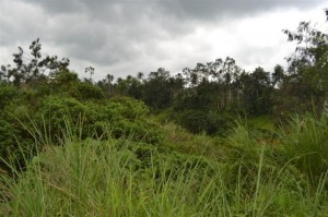 Land for sale in ubud 2