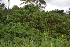 Land for sale in ubud 3