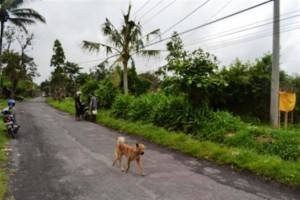 land for sale in ubud kukuh 3