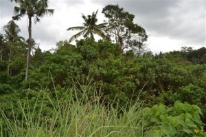 Land for sale in ubud 5