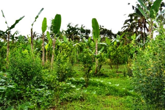 Tanah dijual di Ubud Bali Super Murah - TJUB013B