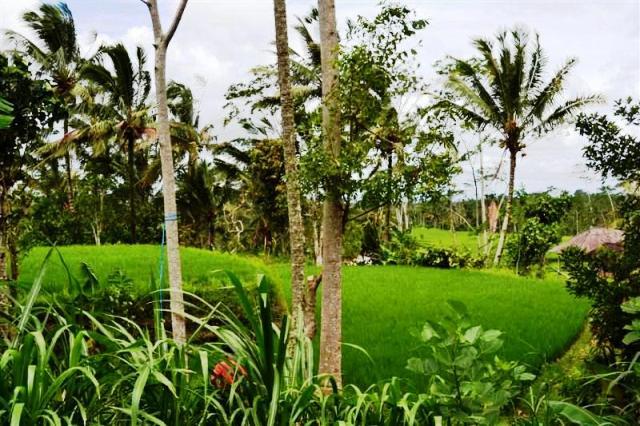 Tanah dijual di ubud Tegalalang view sawah dan tebing sungai - TJUB038B