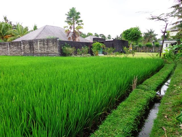 Dijual tanah di Canggu lingkungan villa ( TJCG051B )
