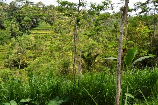 Tanah dijual di Ubud view Sungai  ( TJUB004B )