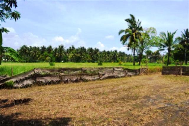 Tanah dijual di Ubud 77 Are di Pakuduwi @ 28 Jt / are ( TJUB031B )