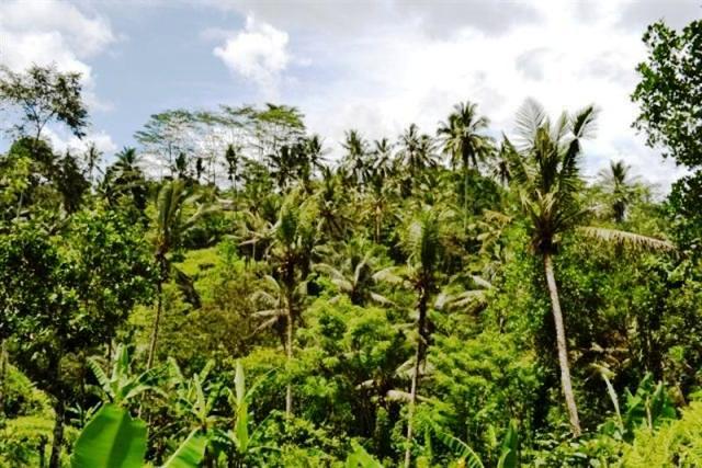 Tanah dijual di Ubud Tegalalang, 26 are cocok untuk villa - TJUB042B