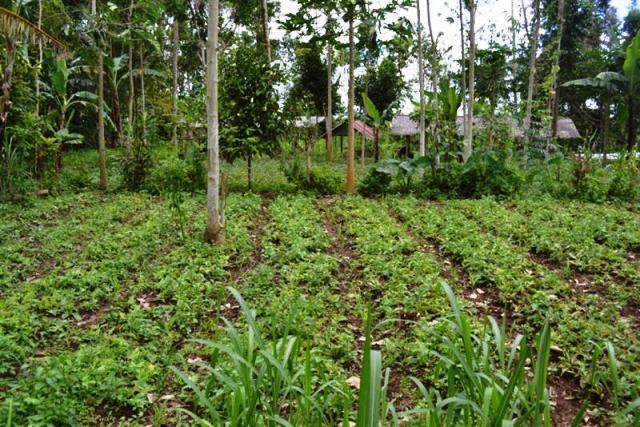 Tanah dijual di Ubud, Taro Tegalalang 40 are - TJUB059B