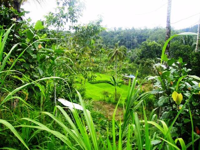 Tanah dijual di Ubud Payangan, 2 Hektar view tebing tepi sungai - TJUB073