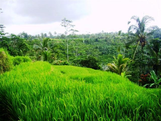 Tanah dijual di Ubud dekat dengan pura Gunung Kawi ( TJUB079B )