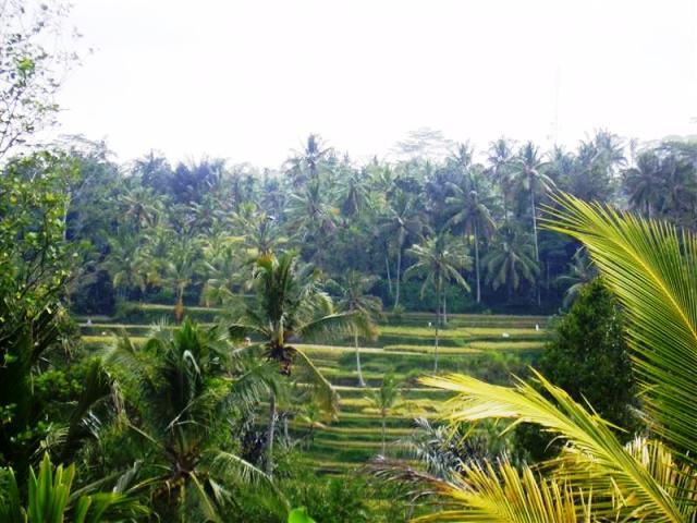 Tanah dijual di Ubud view sawah dekat Pura Gunung Kawi ( TJUB080B )