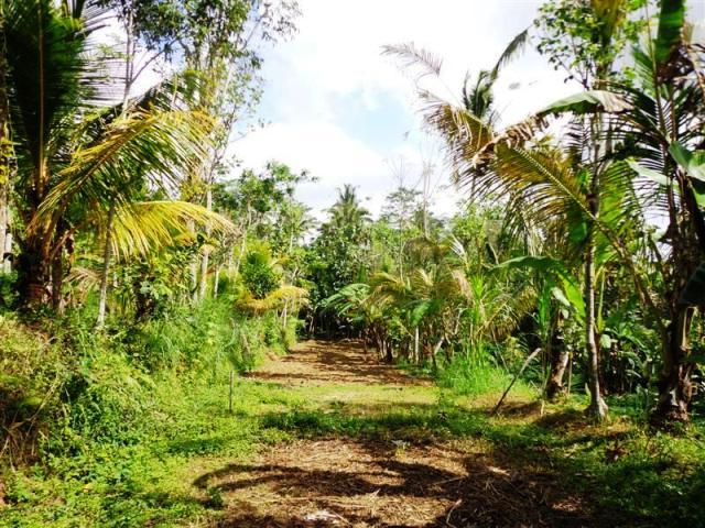 Tanah dijual di Ubud view tebing cocok untuk villa  ( TJUB096B )