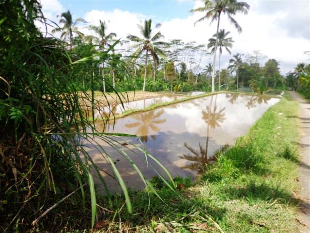 Tanah dijual di Ubud dengan view sawah Tebing ( TJUB099B )
