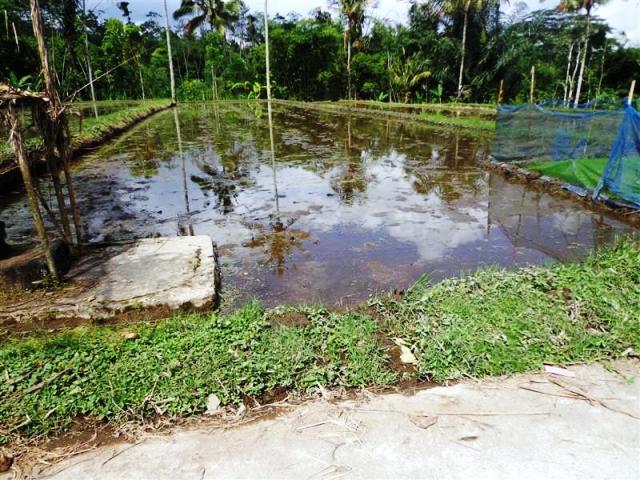 Tanah dijual di Ubud dengan pemandangan sawah ( TJUB101B )