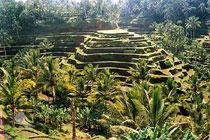 Jual tanah tanah murah di Ubud Bali - tanah tanah murah dijual di Ubud Bali - 2
