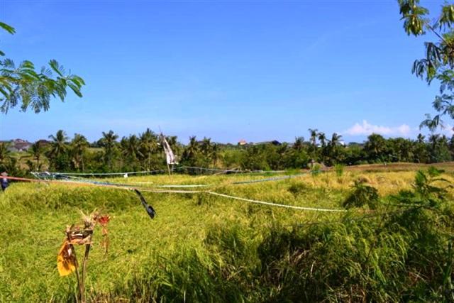 Tanah dijual di Canggu Bali view sawah dekat sungai lokasi Tumbak Bayuh - TJCG034B