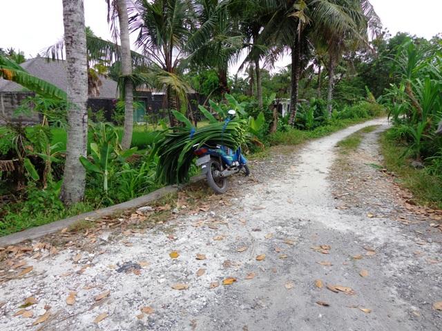 Tanah dijual di Canggu Bali view sungai dekat dengan Pantai Brawa Canggu - TJCG051B