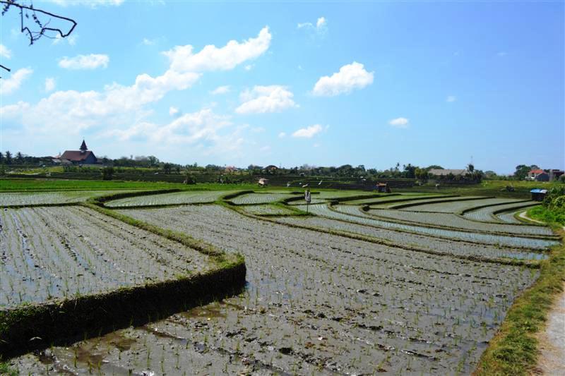 Dijual tanah di Canggu view sawah di Lingkungan Villa – TJCG052B