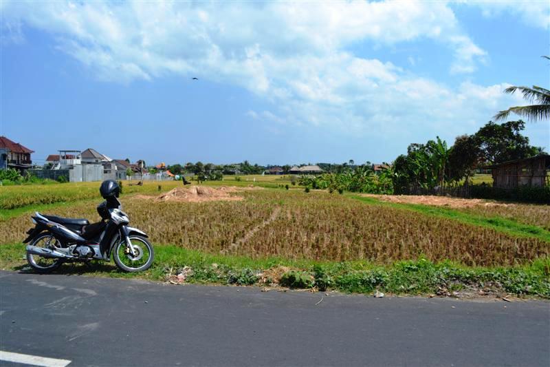 Jual tanah di Canggu Bali view sawah 8 are daerah padang tawang canggu - TJCG053B