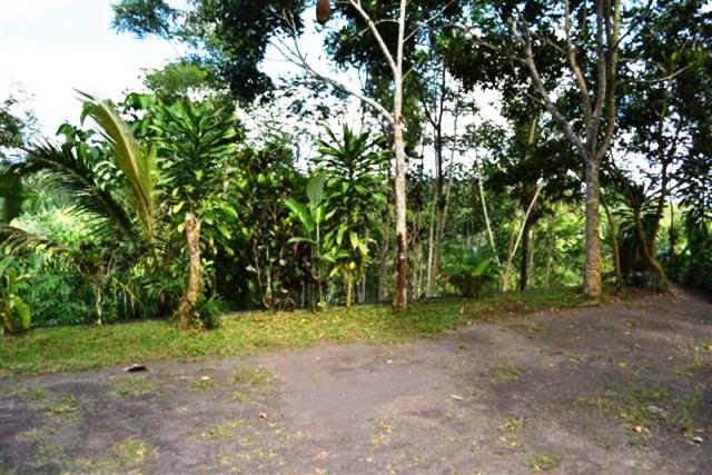 Tanah dijual di Ubud 1 Ha di sengaperang - TJUB047