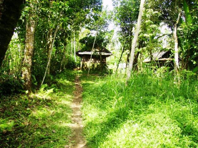Jual tanah di Ubud view sawah cocok untuk villa – TJUB097