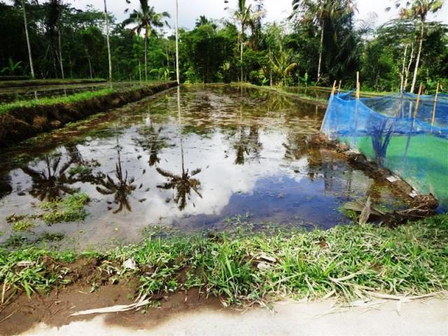 Dijual tanah di Ubud Payangan – TJUB101B