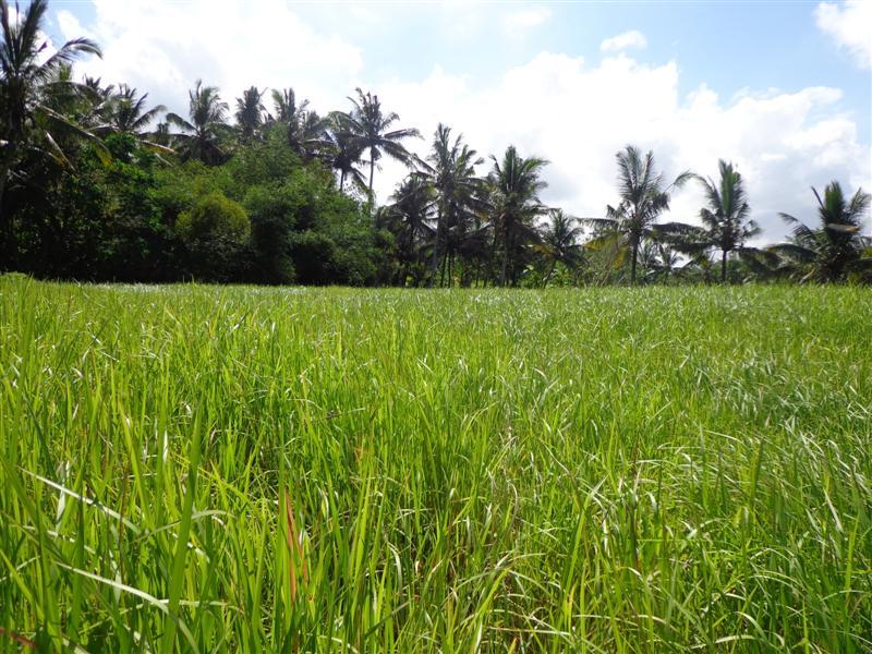 Dijual tanah di Ubud view sungai dan sawah – TJUB113B