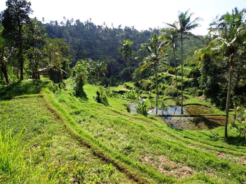 Dijual tanah di Ubud view sangat cantik – TJUB114B