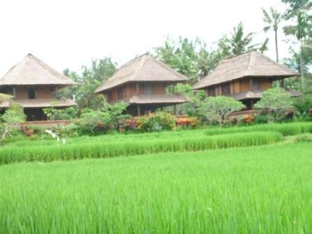 Tanah tanah dijual murah di tanah Ubud Bali - 2