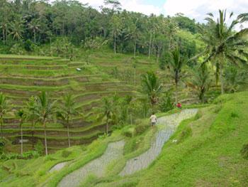 Tanah tanah dijual murah di Tanah Ubud Bali 4