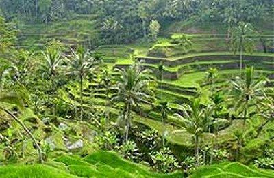 Tanah tanah dijual murah di Tanah Ubud Bali 5