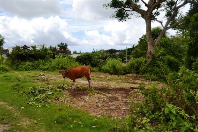 Jual tanah di Jimbaran dekat patung GWK 10 are @ 130 Juta