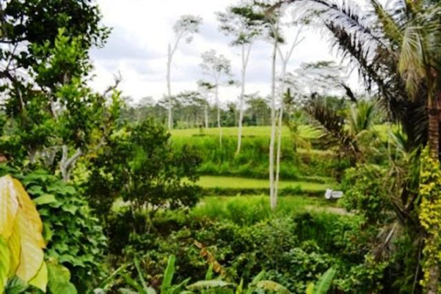 Jual tanah di Ubud view tebing 57 are @ 39 Juta