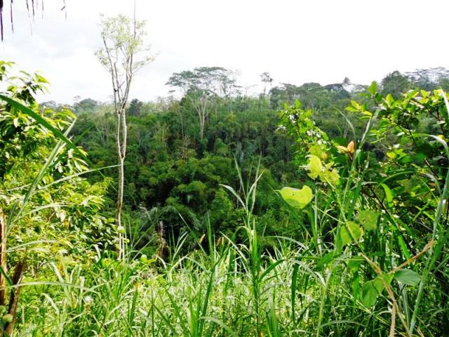 Jual tanah di Ubud view sawah dekat villa 146 are @ 26 Juta