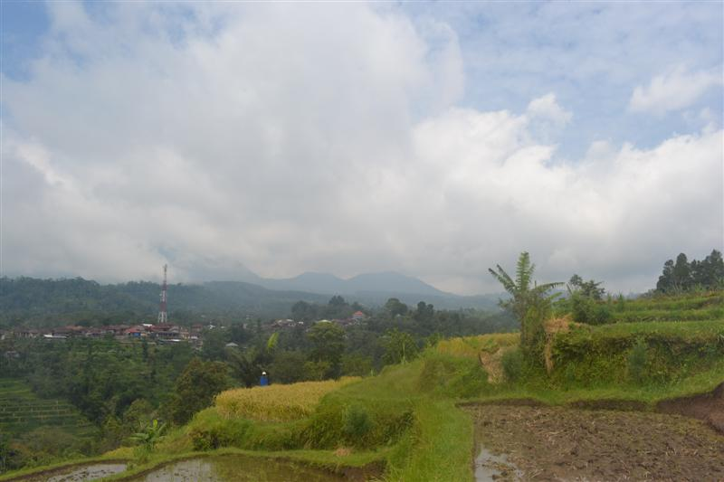 Tanah dijual di baturiti tabanan Bali, view sawah dan gunung - TJBE033