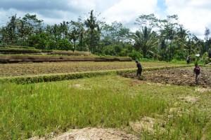 Tanah dijual di Ubud
