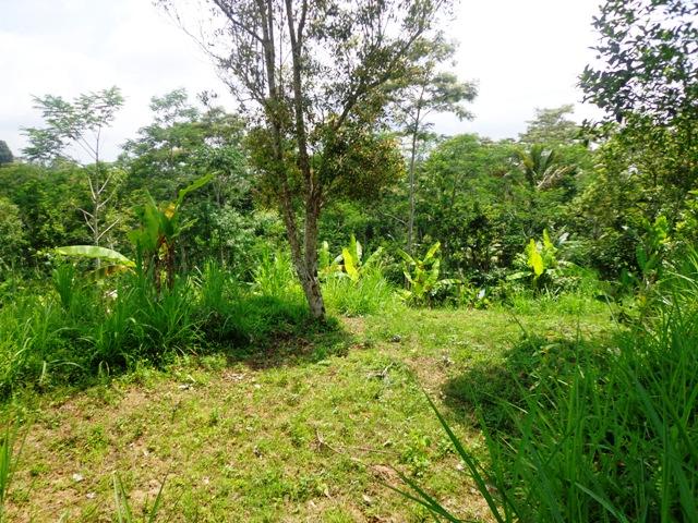 Jual tanah di Ubud – TJUB133 menampilkan pemandangan sawah dan sungai