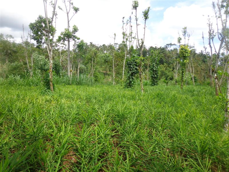 Dijual Tanah di Ubud Bali - TJUB167 view hutan, sungai dan kebun