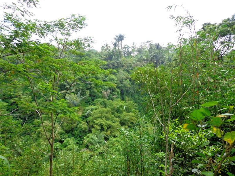 Tanah di Ubud Bali dijual 5,000 m2 Tepi Sungai  di Ubud Tegalalang