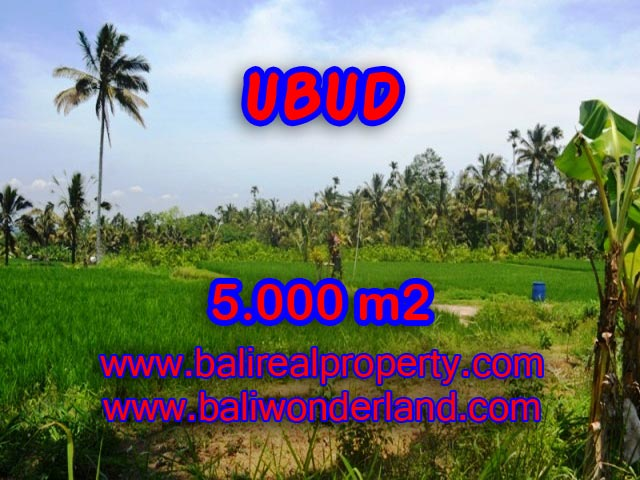 Tanah di Ubud dijual 5.000 m2 sawah dan tebing di Ubud Payangan