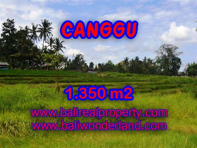 Tanah di Canggu dijual 13,5 Are di Canggu Pererenan Bali