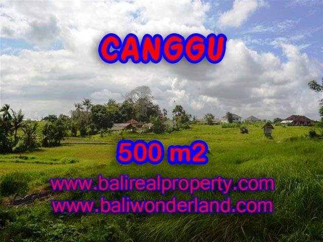 Tanah dijual di Canggu Bali 5 Are di Batu Bolong