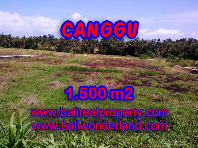 JUAL TANAH DI CANGGU Bali 1,500 m2 di Tumbak Bayuh