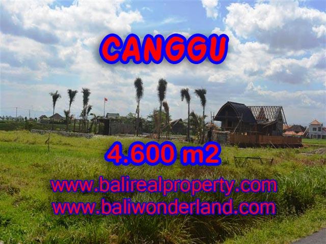Tanah di Canggu Bali dijual 46 Are di Canggu pererenan