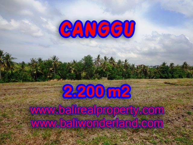 Tanah dijual di Canggu Bali 2,200 m2 di Tumbak Bayuh
