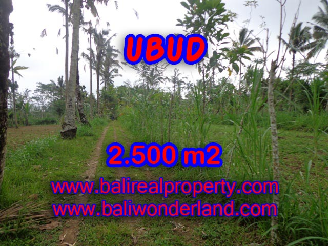 Tanah di Ubud dijual 25 Are View tebing dan hutan di Ubud Tegalalang