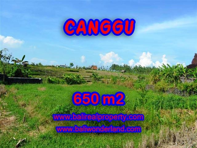 Jual tanah di Canggu Bali 650 m2 View sawah di Canggu Batu Bolong