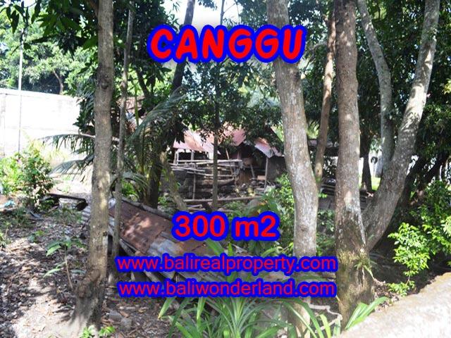 Tanah dijual di Canggu Bali 300 m2 view sawah di Kerobokan