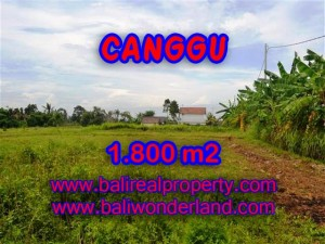 DIJUAL TANAH DI CANGGU BALI MURAH TJCG134 - INVESTASI PROPERTY DI BALI